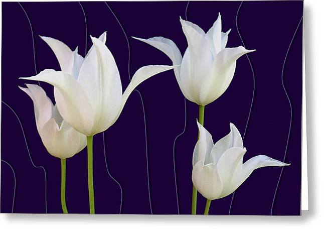 White Tulips For A New Age Greeting Card