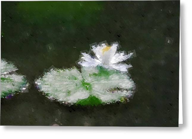 White Water Lily And Leaf Greeting Card