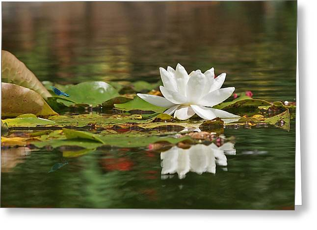 White Water Lily With Damselflies Greeting Card by Gill Billington