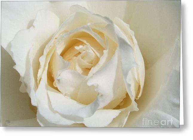 White Wedding Rose Greeting Card