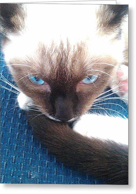White Whiskers Siamese Cat Greeting Card by Becky Burt