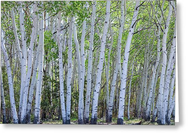 White Wilderness Greeting Card by James BO Insogna