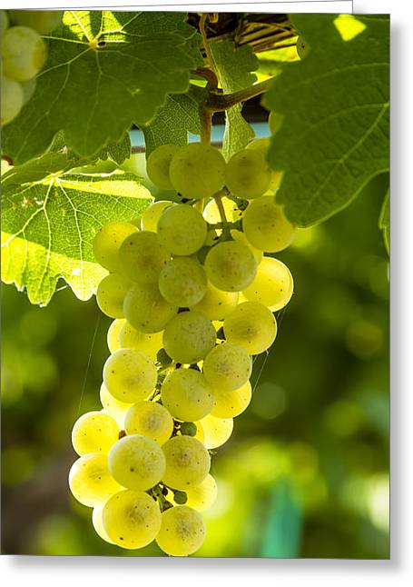 White Wine Grapes Lit By The Sun Greeting Card