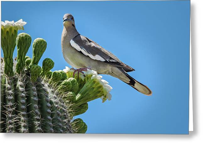 Greeting Card featuring the photograph White Winged Dove On Cactus Flower by Penny Lisowski