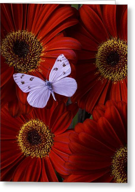 White Wings On Red Daisy Greeting Card by Garry Gay