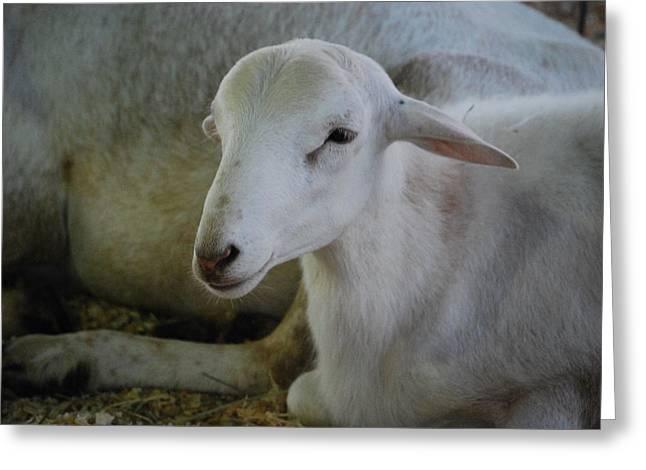 White Wool Greeting Card by Lakida Mcnair