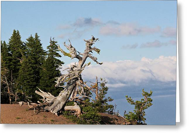 Crater Lake Greeting Cards - Whitebark Pine at Crater Lakes rim - Oregon Greeting Card by Christine Till