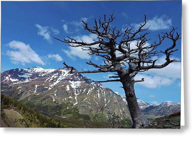 Whitebark Pine Greeting Card by Eric Fellegy