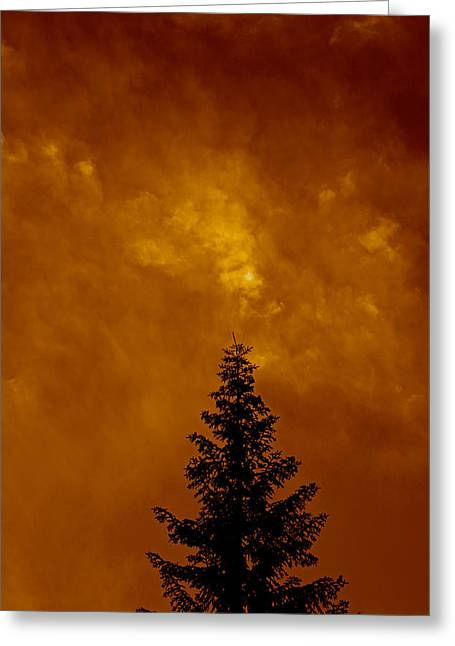 Whitebark Pine Near Sunset Greeting Card by DUG Harpster