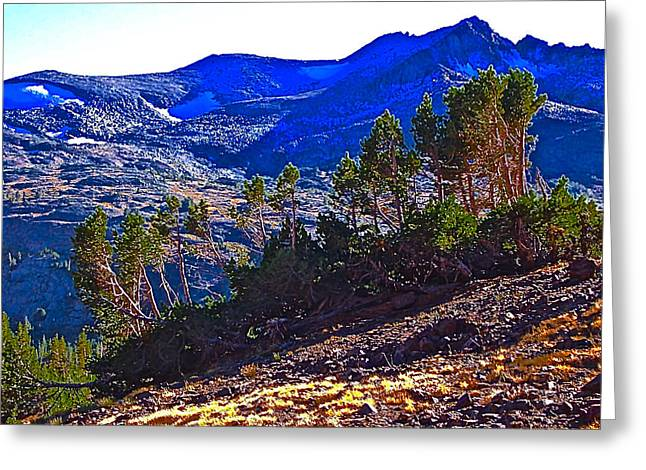 Whitebark Pines At Timberline V2 Greeting Card by Scott L Holtslander