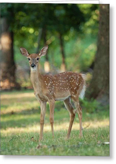 Whitetail Deer Fawn Greeting Card by Erin Cadigan