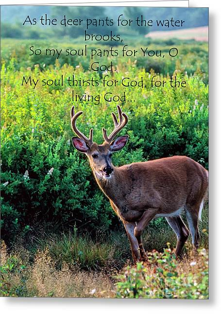 Whitetail Deer Panting Greeting Card