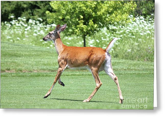 Whitetail Doe On The Run Greeting Card by Steve Gass