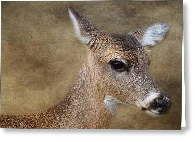Whitetail Doe Portrait Greeting Card by TnBackroadsPhotos
