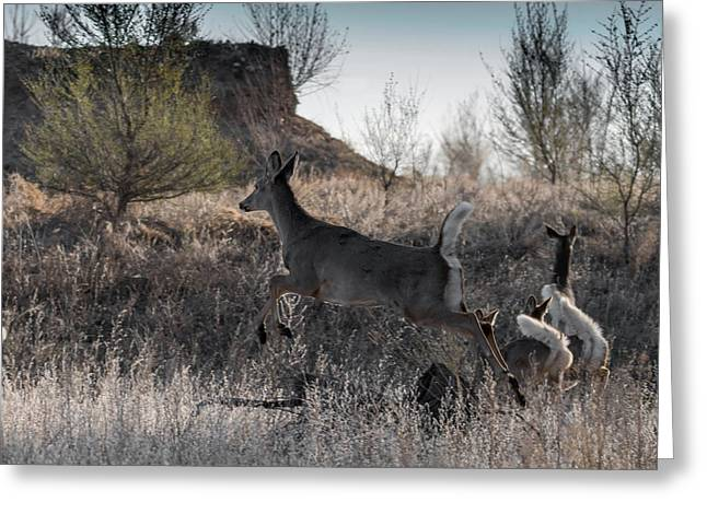 Whitetail In Flight Greeting Card by Ernie Echols