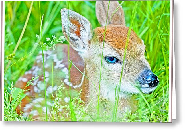 Greeting Card featuring the photograph Whitetailed Deer Fawn by A Gurmankin