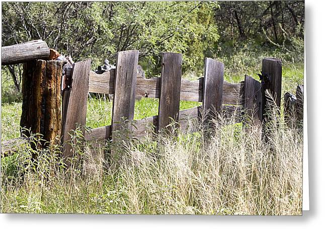 Greeting Card featuring the photograph Who Ate The Fence by Phyllis Denton