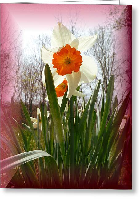 Who Planted Those Flowers Greeting Card by Patricia Keller