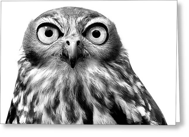 Whoo You Callin A Wise Guy Greeting Card by Marion Cullen