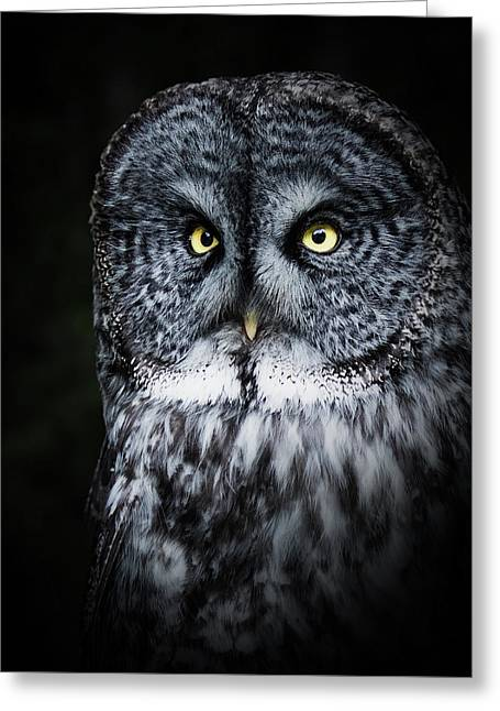 Whooo Are You Looking At? Greeting Card