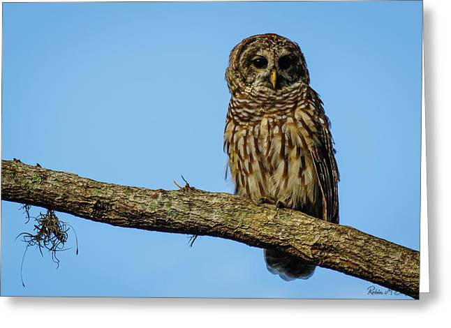 Whooo Greeting Card
