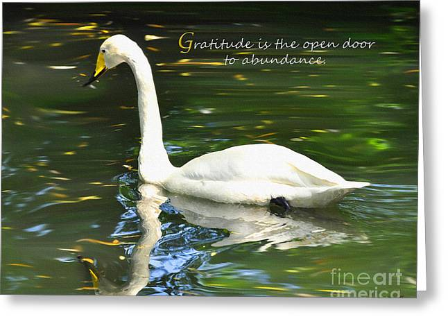 Whooper Swan Gratitude Greeting Card by Diane E Berry