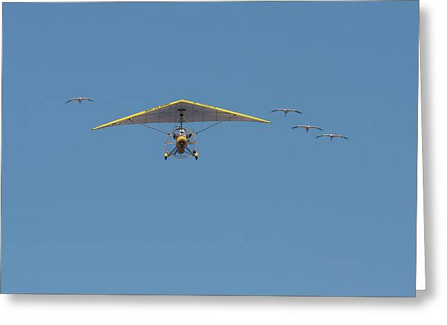 Whooping Cranes And Operation Migration Ultralight Greeting Card