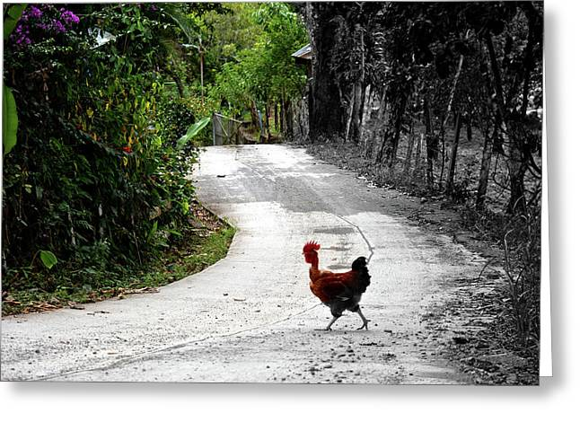 Why Did The Rooster Cross The Road? Greeting Card by Sonja Bratz