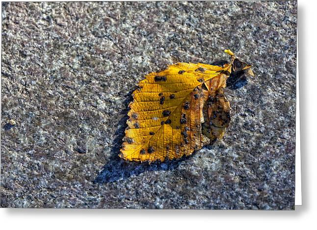 Fallen Leaf Greeting Cards - Why We Call It Fall Greeting Card by Robert Ullmann