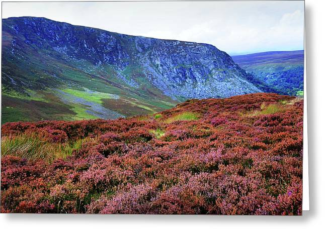 Greeting Card featuring the photograph Wicklow Heather Carpet by Jenny Rainbow
