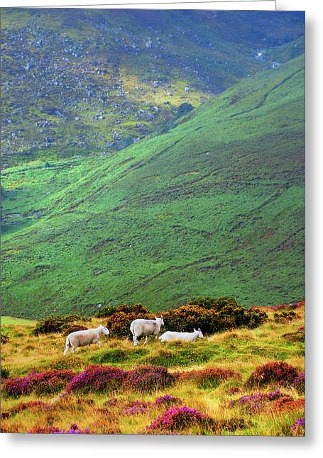 Greeting Card featuring the photograph Wicklow Pastoral by Jenny Rainbow