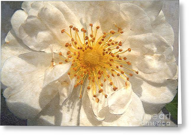 Stamen Digital Art Greeting Cards - Wide Open Greeting Card by RC DeWinter