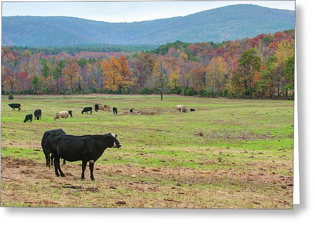 Wide Open Spaces - Autumn Landscape Greeting Card by Gregory Ballos