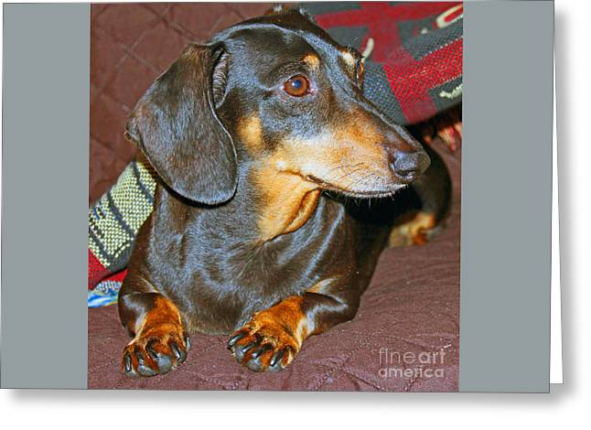 Wiener Dog Greeting Card