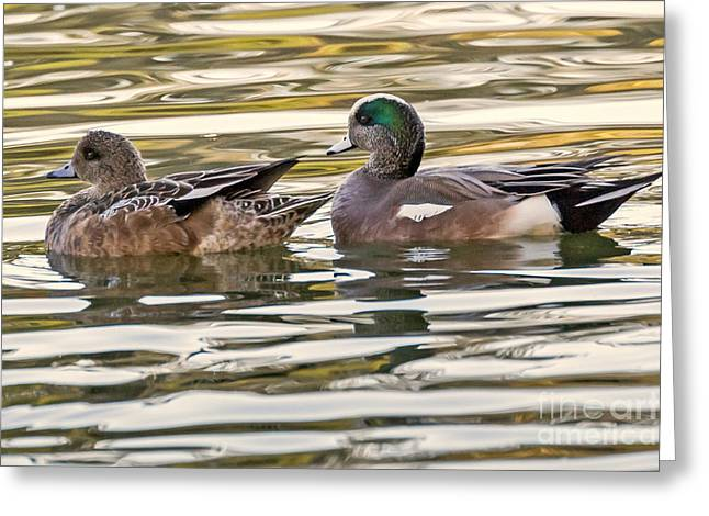 Wigeon Couple Greeting Card by Kate Brown
