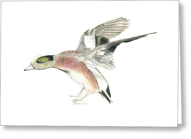 Wigeon Greeting Card