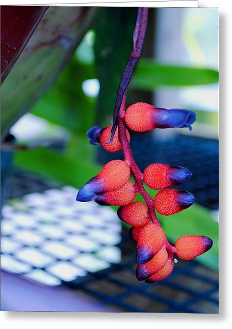 Wild About Bromeliads2 Greeting Card