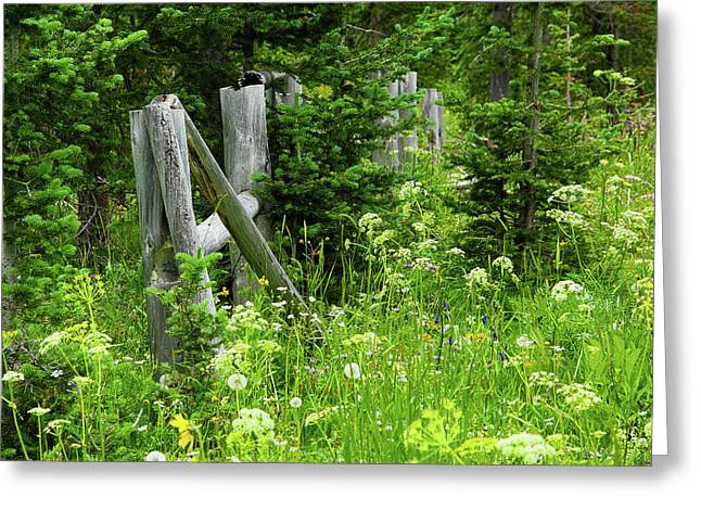 Greeting Card featuring the photograph Wild And Wildflowers by Marie Leslie