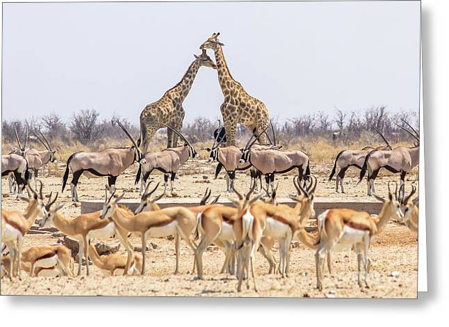 Wild Animals Pyramid Greeting Card