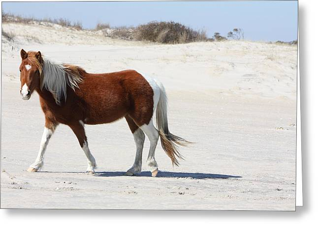 Wild Assateague Ponies 2 Greeting Card
