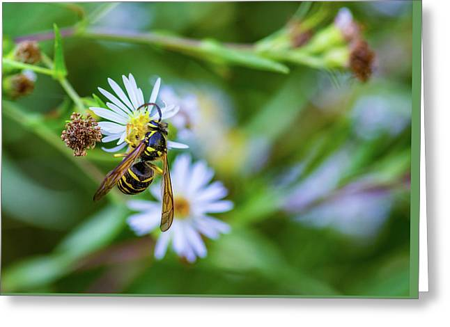 Wild Aster And Wasp Greeting Card by Steve Harrington