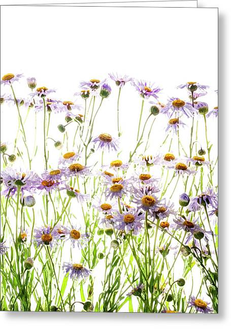 Wild Aster Digital Watercolor Painting Greeting Card by Vishwanath Bhat
