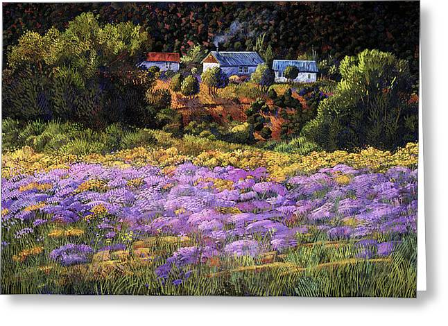 Wild Asters At Picuris Greeting Card by Donna Clair
