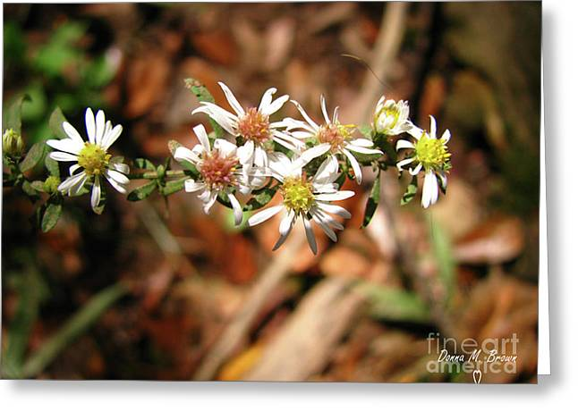 Greeting Card featuring the photograph Wild Astors by Donna Brown
