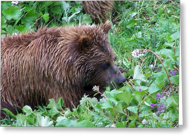Wild Bear Eating Berries  Greeting Card by Kathy  White