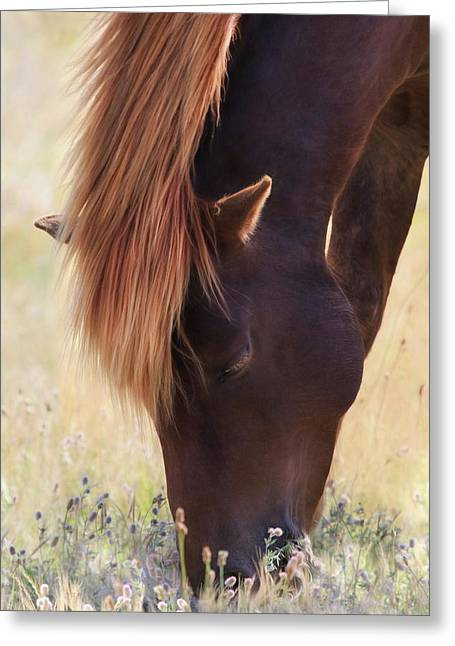 Wild Beauty Greeting Card by Lori Deiter