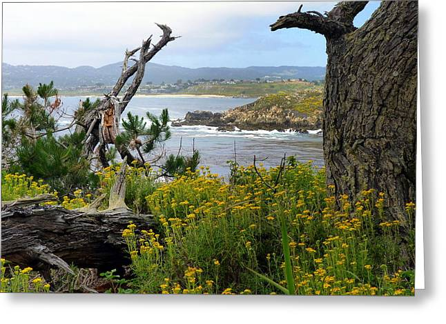 Wild Beauty Of Point Lobos  Greeting Card by Carla Parris