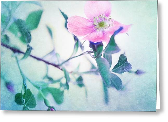 Wild Beauty Greeting Card by Priska Wettstein
