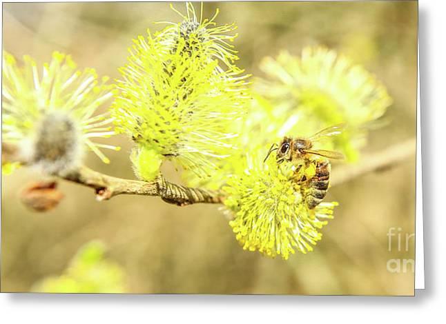 Wild Bee Spring Greeting Card by Jake Ratz