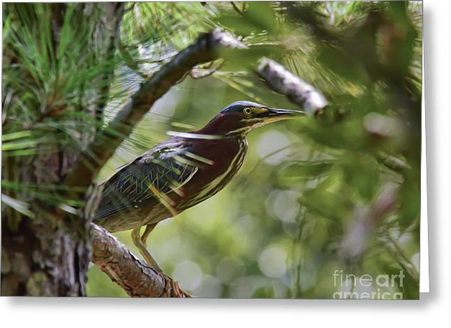 Greeting Card featuring the photograph Wild Birds - Green Heron Tries To Hide by Kerri Farley